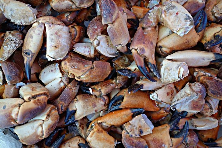 crab-1523070_1920 (2)
