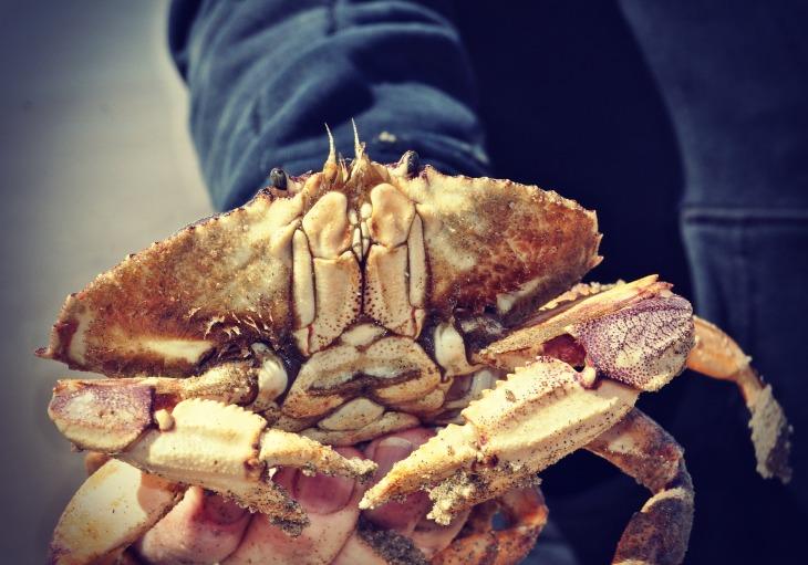 crab-2716184_1920